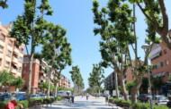 L'Ajuntament farà demà un tractament fitosanitari dels plàtans i palmeres del municipi