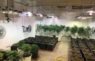 La Policia Local de la Llagosta troba una plantació de marihuana en una nau del Polígon industrial