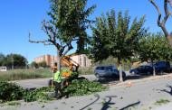 Aquest matí ha començat la poda anual dels arbres de la Llagosta