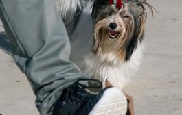 Bona acollida de la XV edició del Concurs i exposició canins