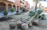 L'Ajuntament de la Llagosta fa una renovació d'arbrat
