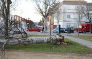 El vent d'aquesta matinada ha provocat la caiguda de dos arbres