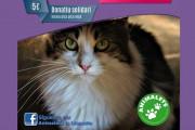 Animalets fa demà dissabte una xerrada sobre els gats tímids