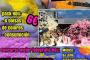 Els Saltats celebren demà dissabte una festa Holi a la plaça de la Sardana