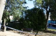 L'Ajuntament rebrà 35.141 euros de la Diputació pels danys del temporal del 9 de desembre