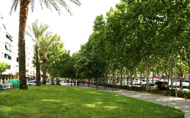 Dimarts i dimecres es realitzaran diversos tractaments fitosanitaris a l'arbrat urbà