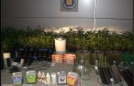 Detenen un veí de la Llagosta i un de Montcada amb 161 plantes de marihuana