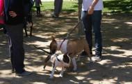Tres gossos han trobat casa gràcies a la 3a Fira d'adopcions d'animals abandonats