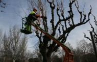 El dimecres comencen els treballs de poda de l'arbrat urbà de la Llagosta