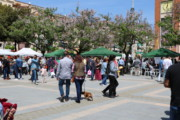 La Llagosta va celebrar ahir Sant Jordi amb una plaça plena de llibres i roses