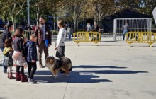 Prop de 40 gossos participen a la 16a Exposició canina de la nostra localitat