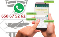 Més de 300 persones s'han donat d'alta al servei d'informació per WhatsApp
