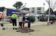 L'Ajuntament renova 80 arbres a diferents espais
