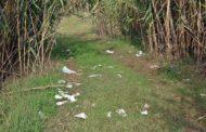 L'Ajuntament organitza demà una jornada de neteja de la riera de Caldes