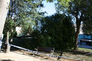 caiguda d'arbres per vent (1)