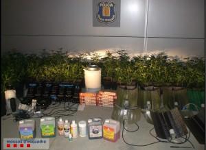 IMG 2 150521 NdP 042 RPMS Plantació marihuana Torrelavit