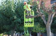 L'Ajuntament inicia la poda anual de 1.400 arbres