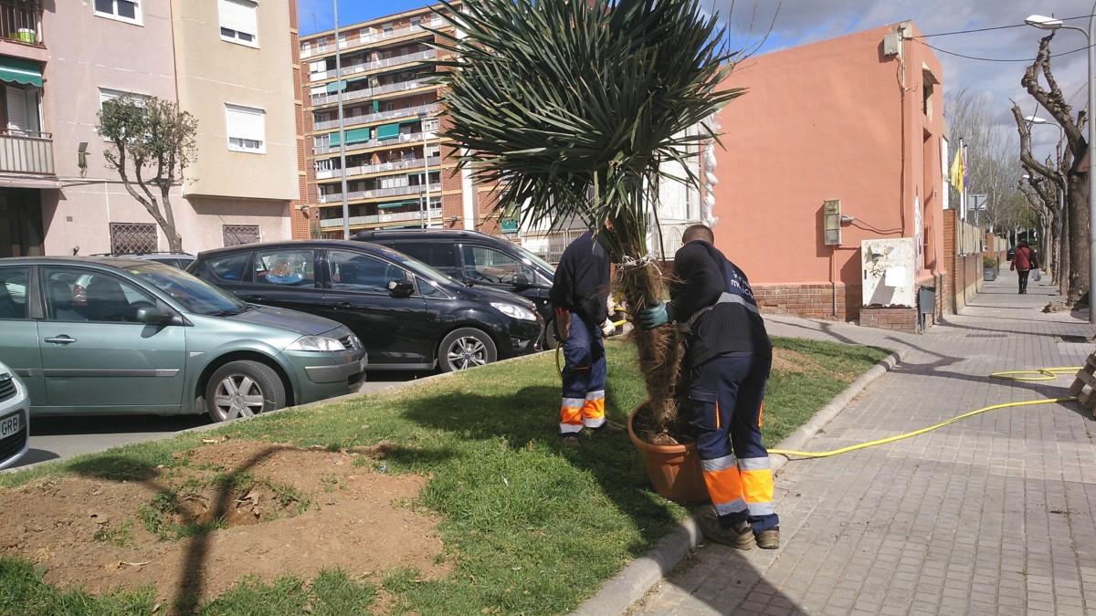 Nous arbres per als carrers de la Llagosta