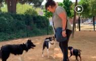 [Vídeo] Es reobre el Gos Parc amb el doble d'espai